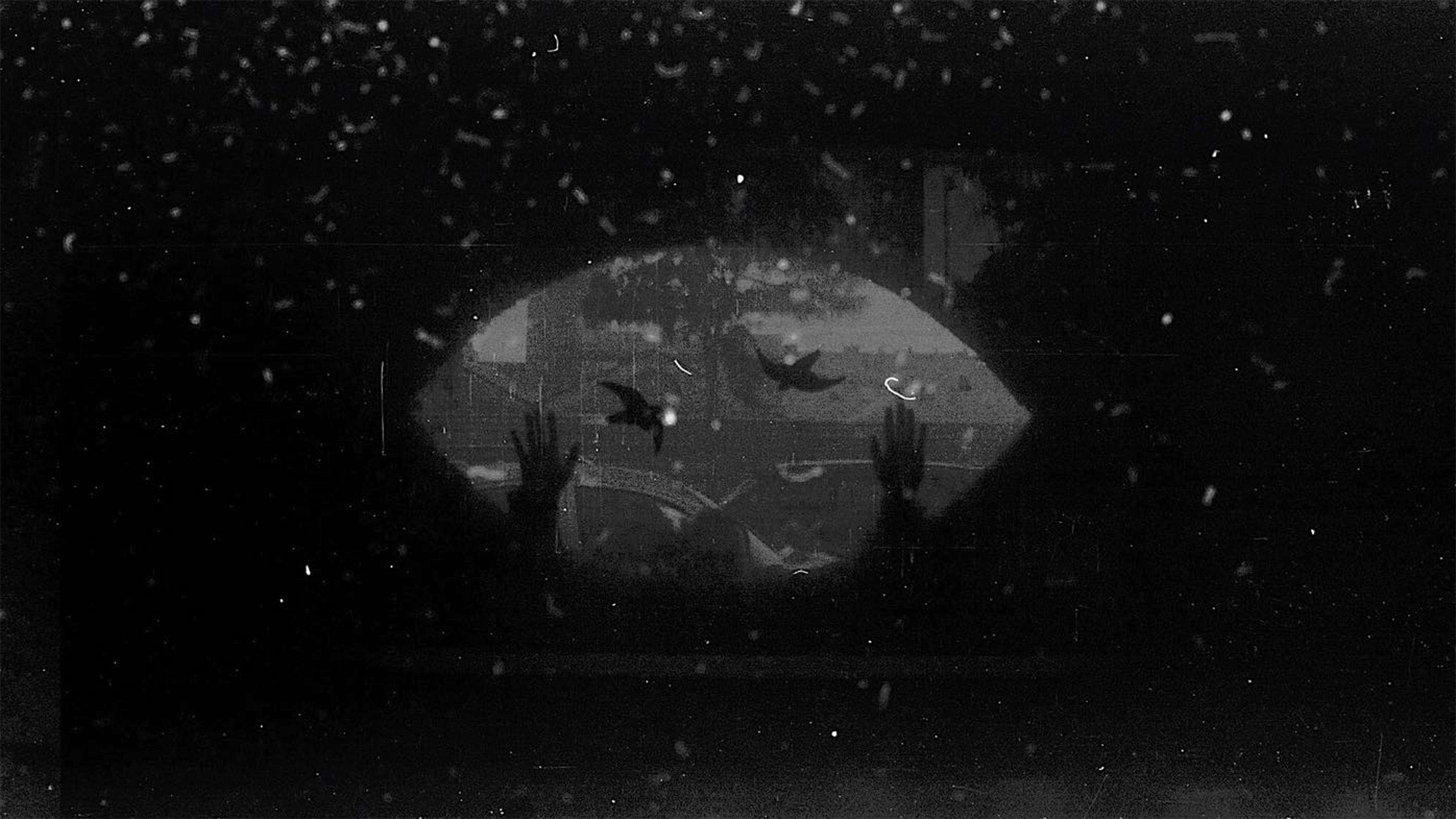 Ana Peixet en Contrafotografía - revelado con cerveza